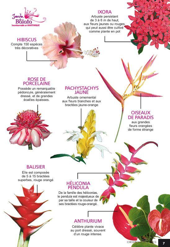 Flore De Martinique Martinique Pinterest Flowers Caribbean