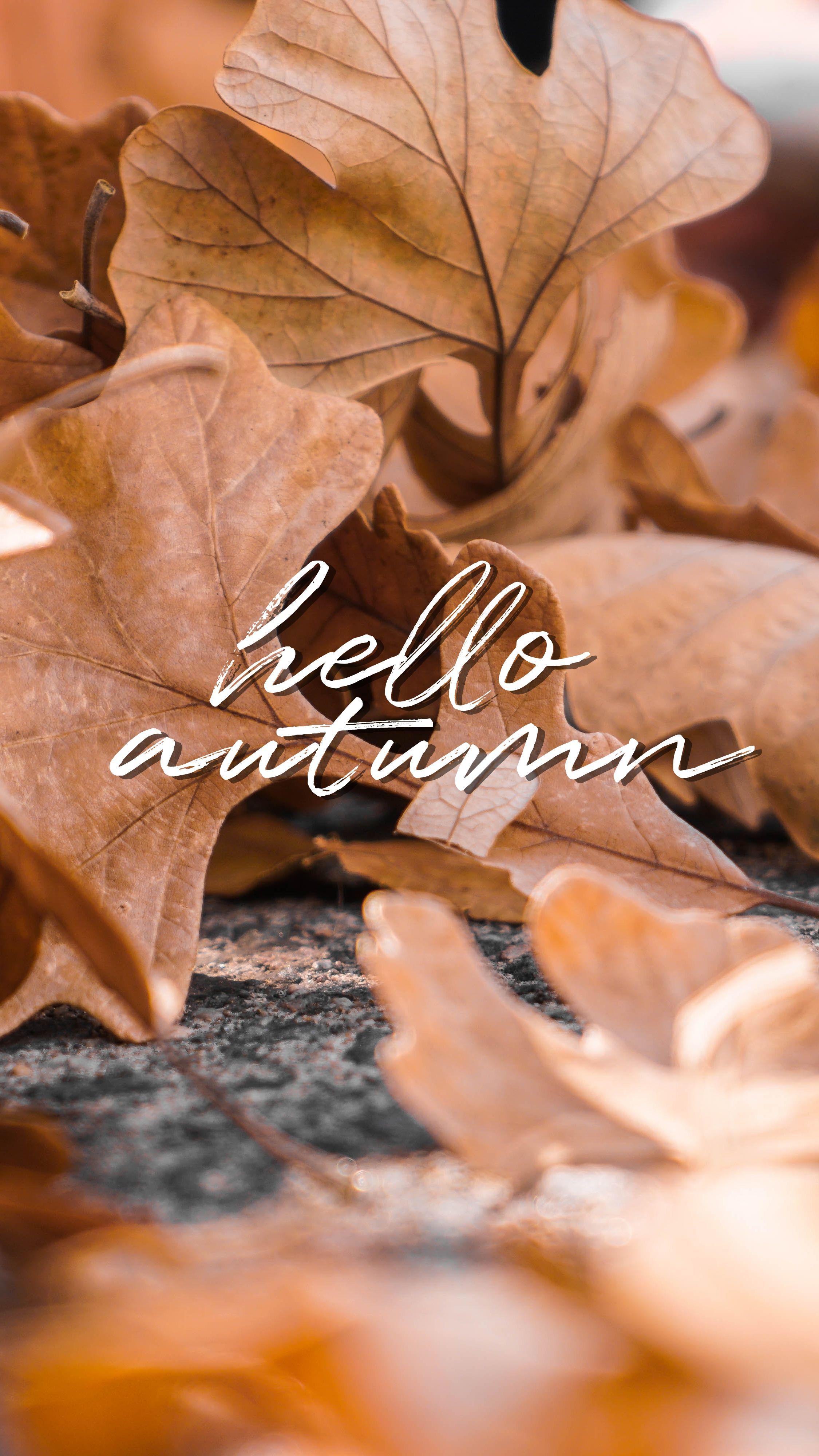 Wallpaper 7 Hello Autumn Fond D Ecran Colore Fond Ecran Automne Fond D Ecran Telephone
