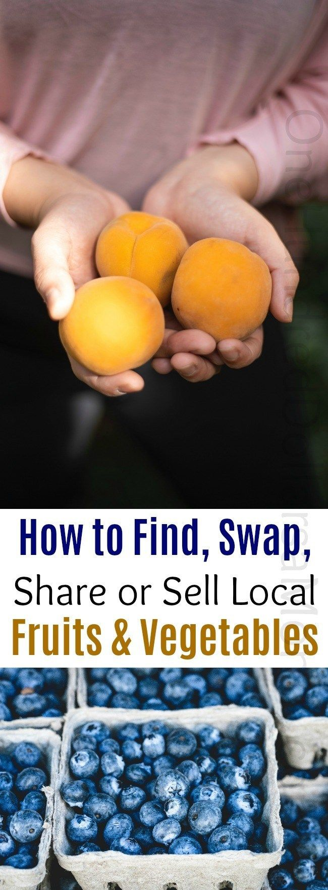 How to Find, Swap, Share or Sell Local Fruits and