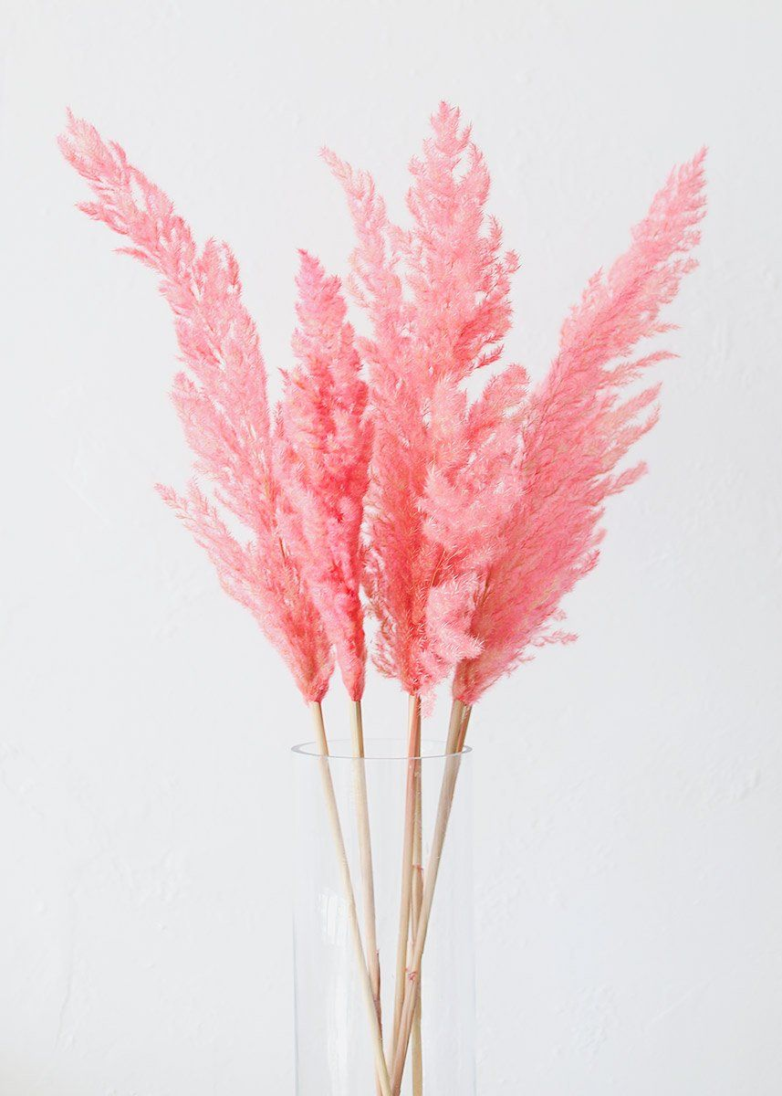 Natural Dried Pampas Grass In Pink Pampas Grass Afloral Com Pink Pampas Grass Faux Flowers Dried Floral