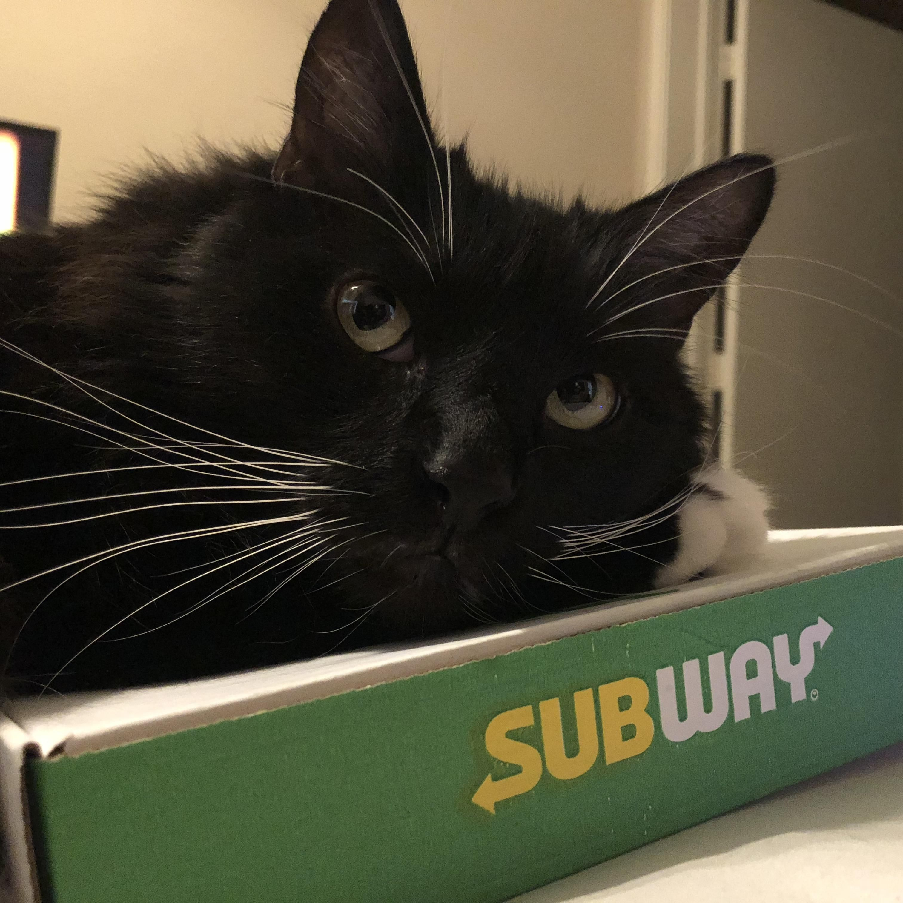 Monster And His Subway Kitty Cats Cute