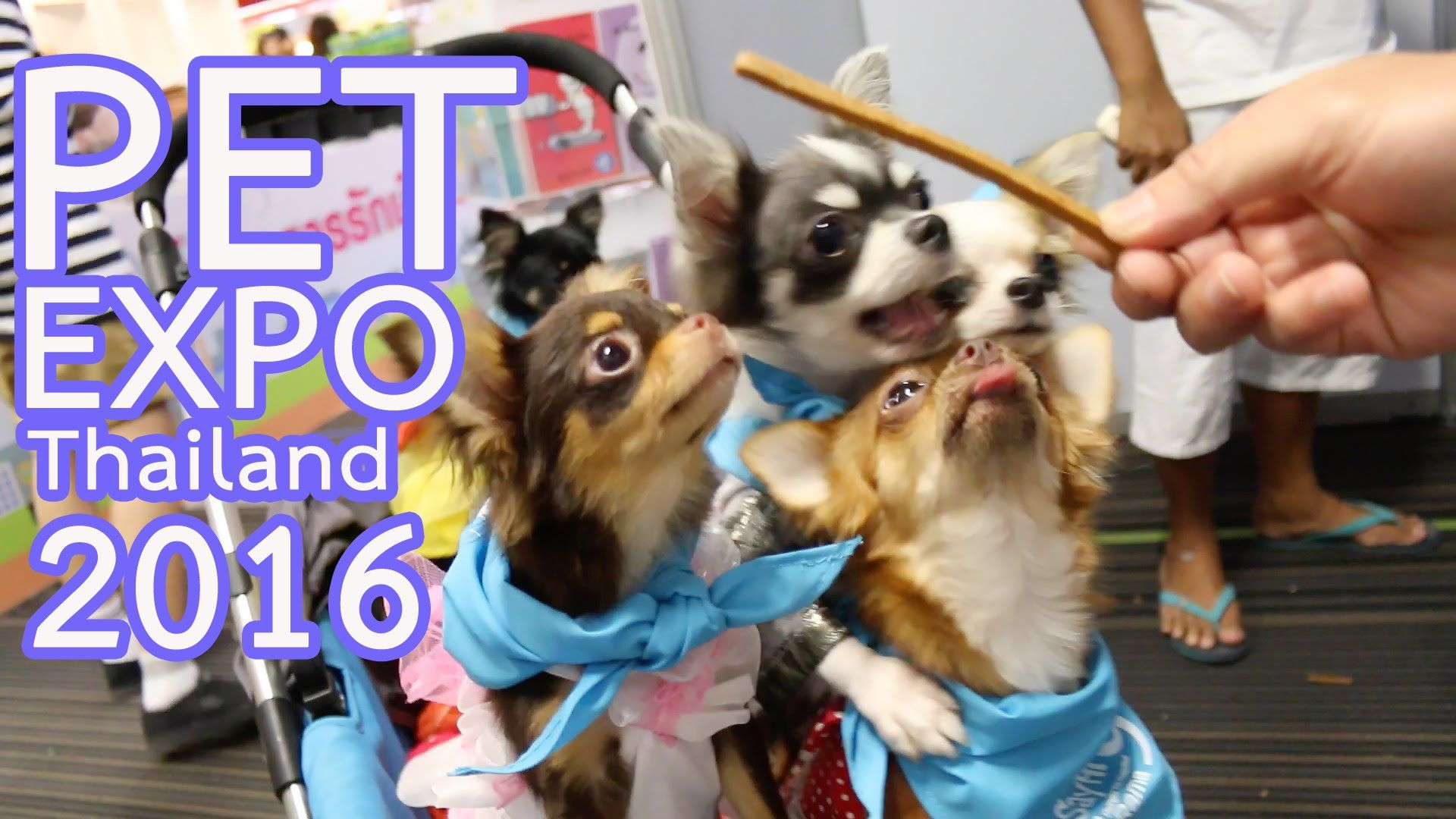 PET EXPO THAILAND 2016