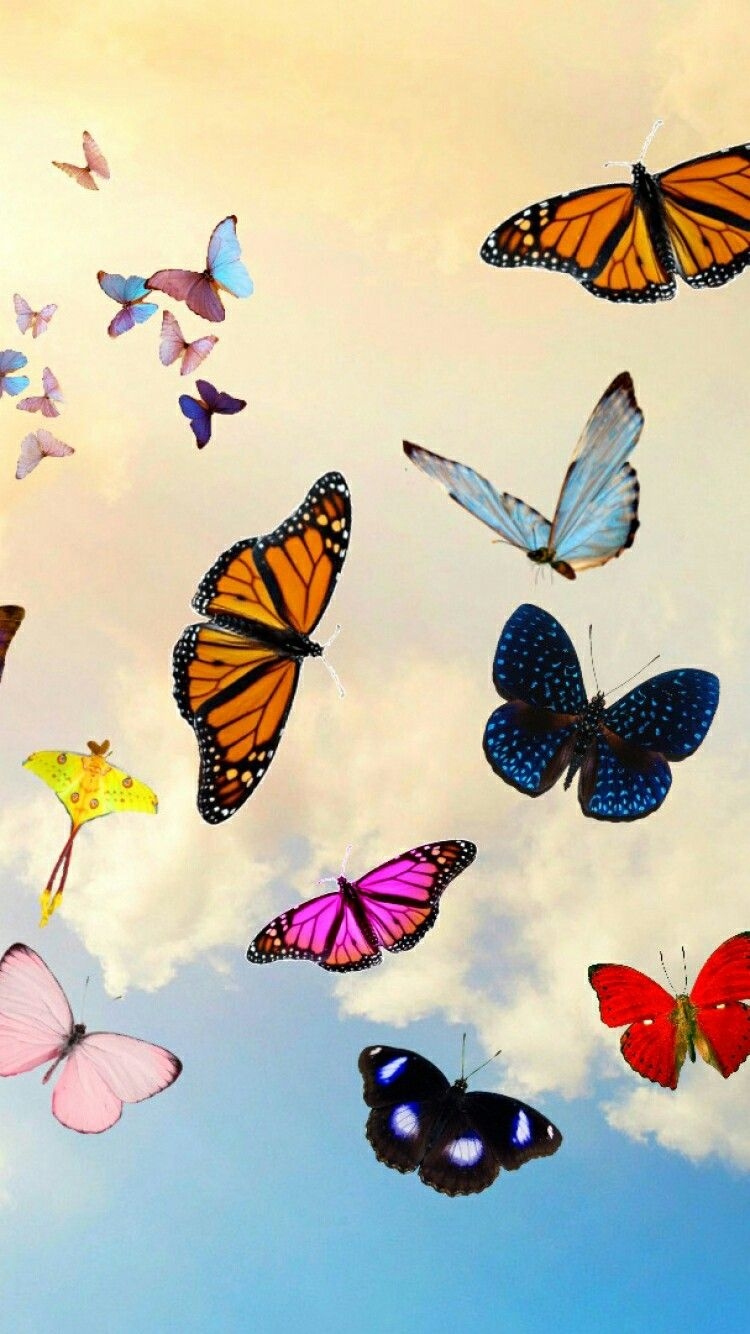 Pin By Sukhpreet On Wallpapers Butterfly Wallpaper Iphone Aesthetic Iphone Wallpaper Cute Patterns Wallpaper