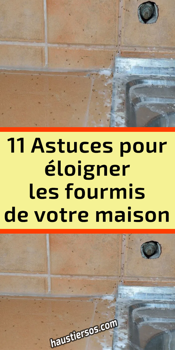 11 Astuces pour éloigner les fourmis de votre maison