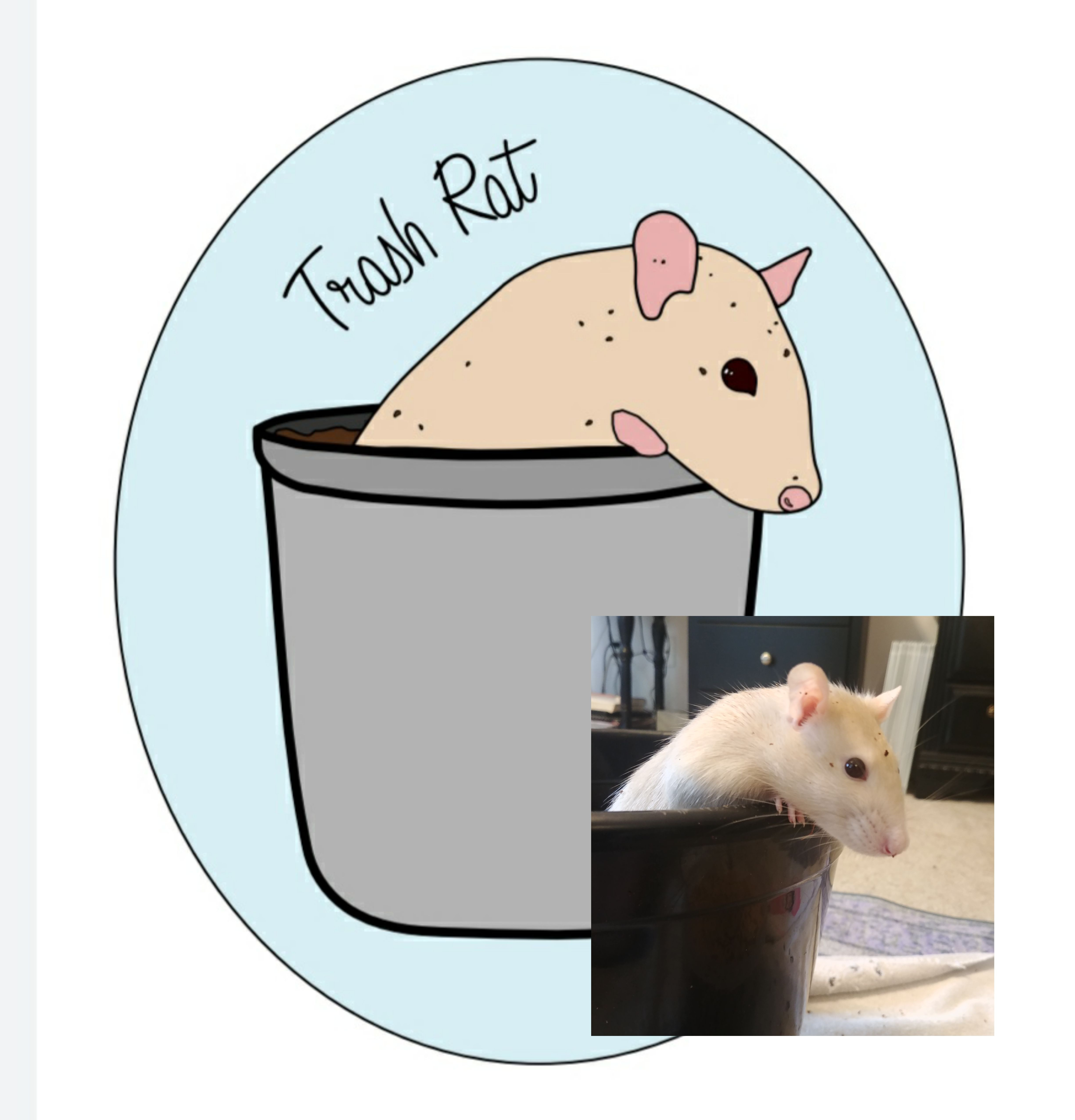In Memory Of My Beloved Tat Rat Who Simply Adored Jumping Into Trash Cans Rat Rats Rodent Pet Rats Pets Adorable