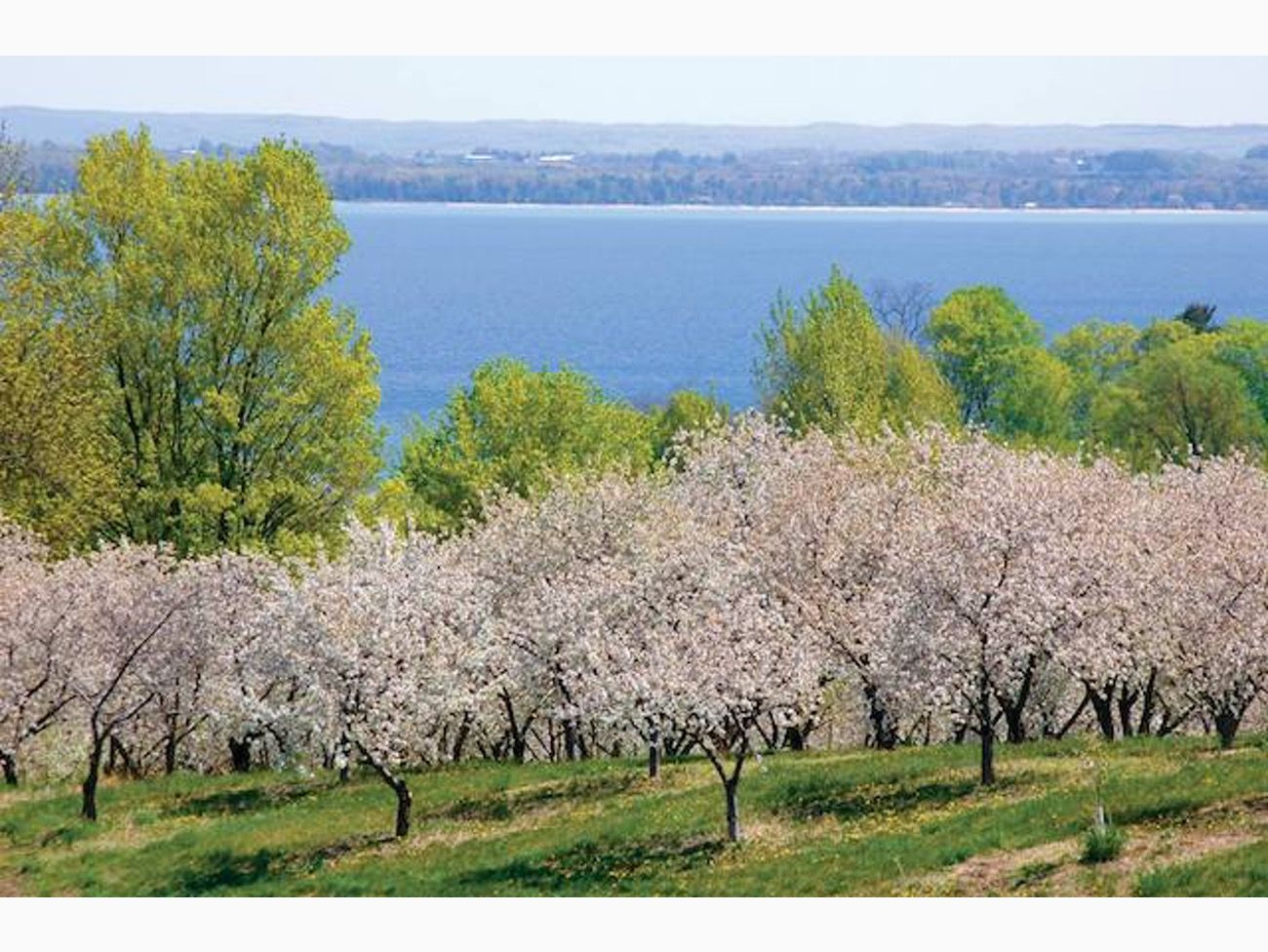 12 Places To See Cherry Blossoms In The United States Traverse City Michigan Traverse City Michigan