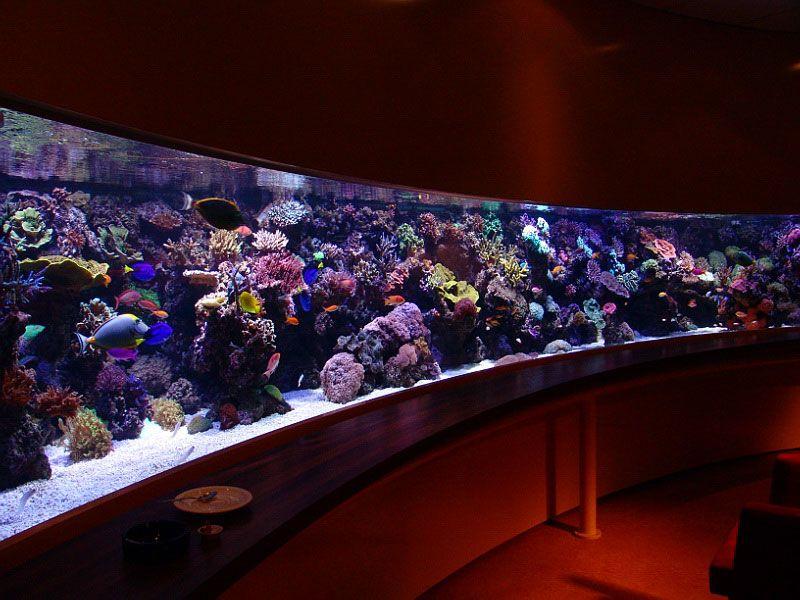 Aquariums as art saltwater aquarium aquariums and fish for Big fish tanks