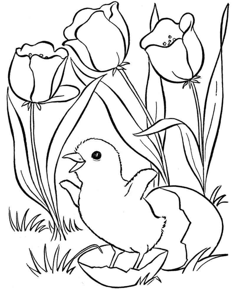 Spring Bird Coloring Pages
