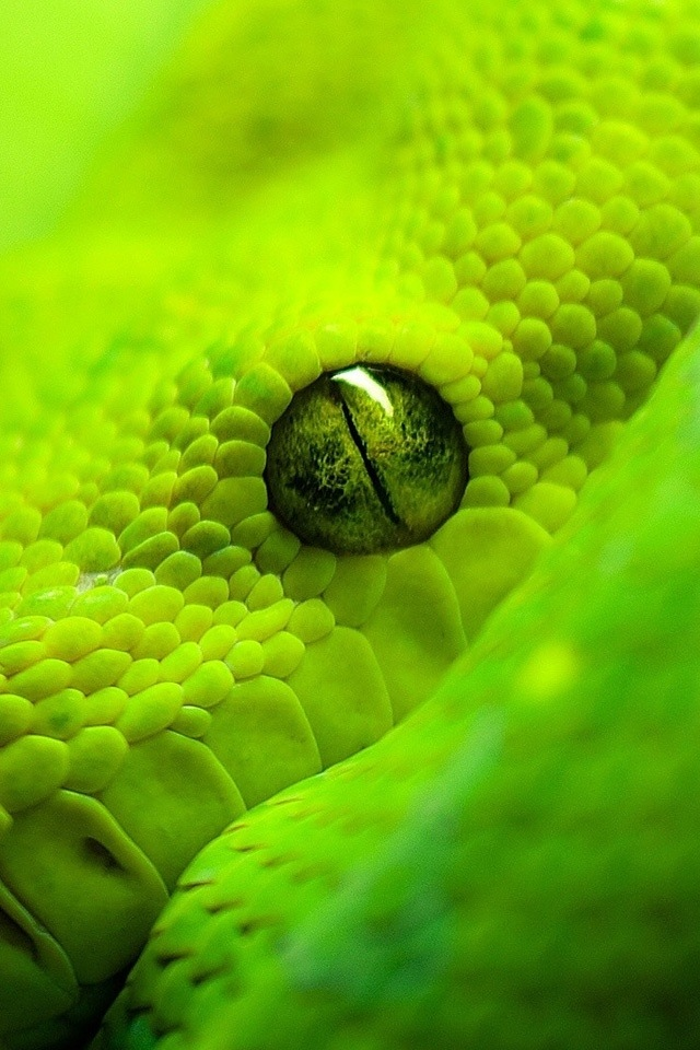 Pin By Todd Gould On Nature Snake Animals Beautiful Beautiful Snakes