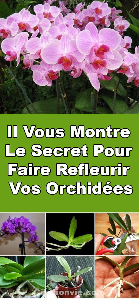 Il Vous Montre Le Secret Pour Faire Refleurir Vos Orchidees