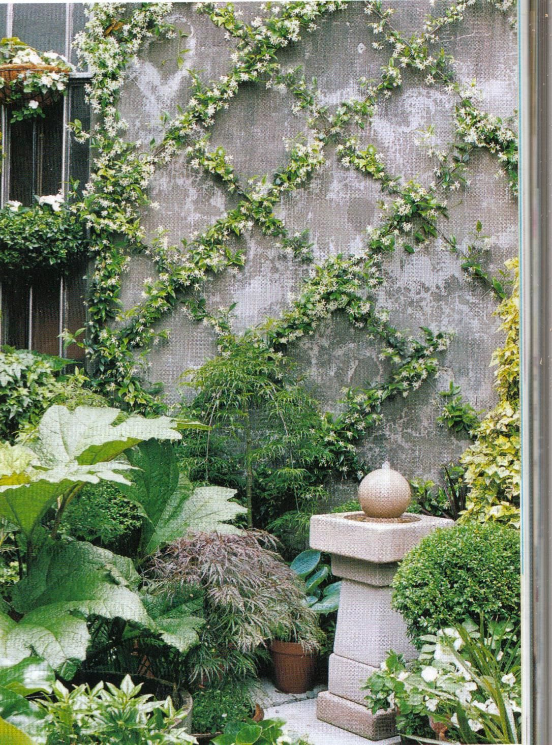 Zig zag star jasmine on a wall garden designs for Landscaping courses nz