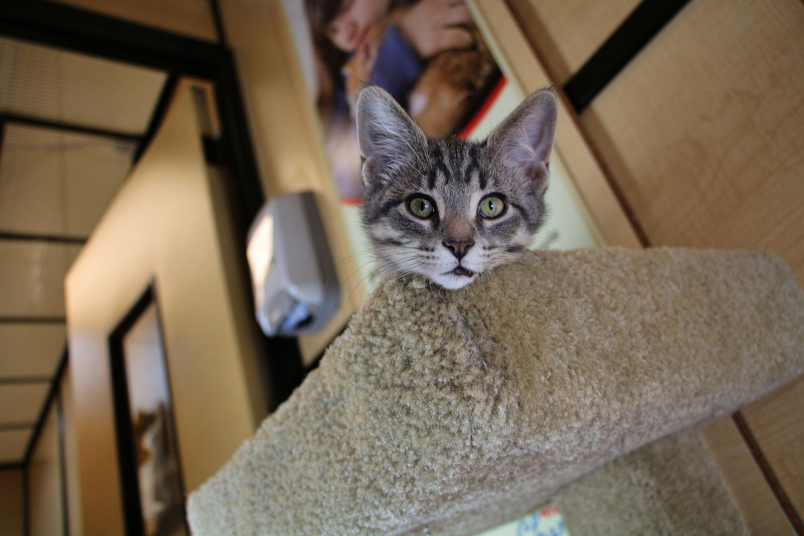 Kittens For Adoption Rochester Ny Little So Cute Animals To Draw
