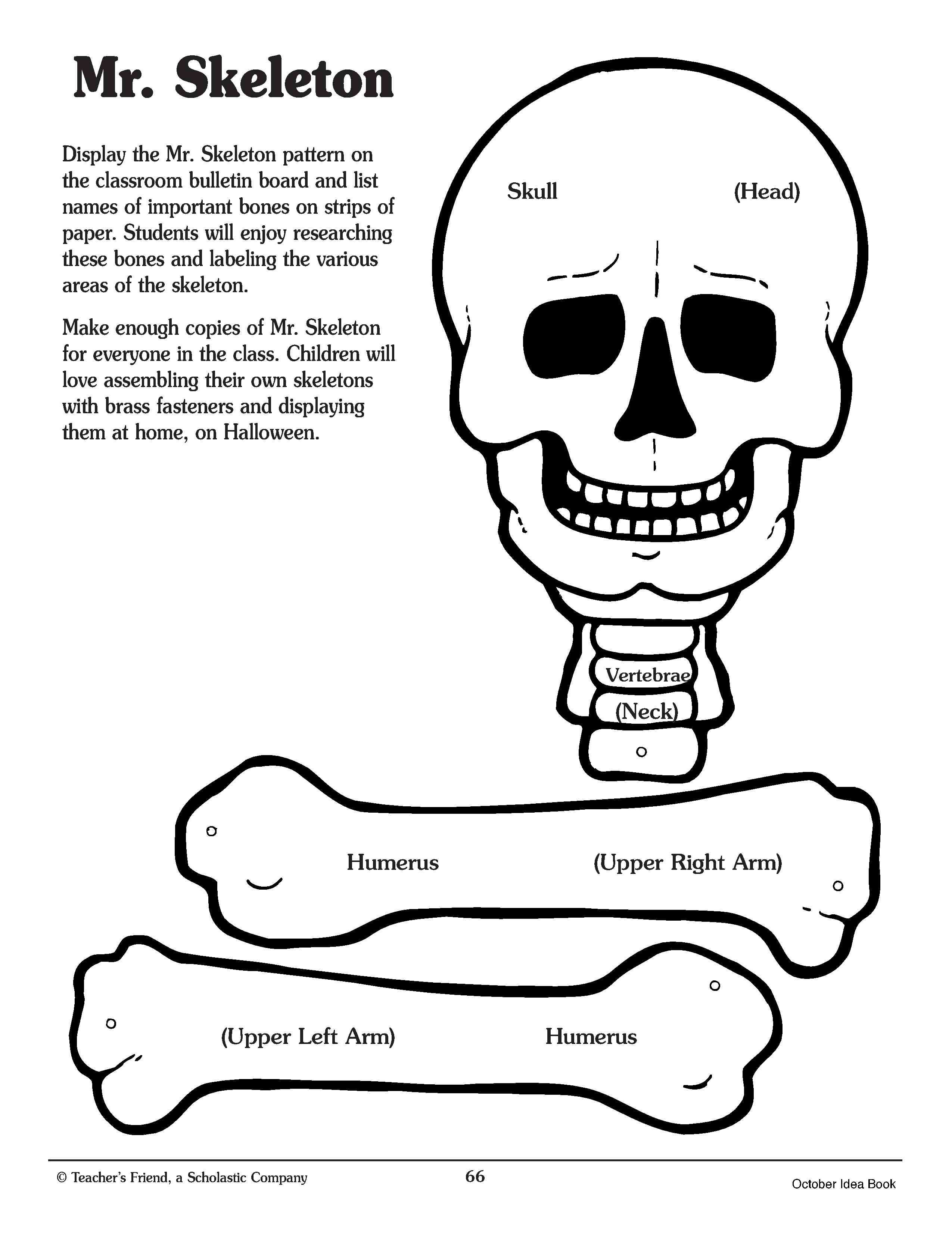 This is a photo of Canny Printable Human Skeleton