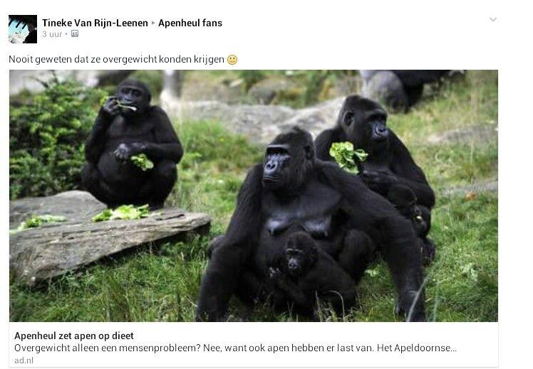 Overgewicht bij apen.