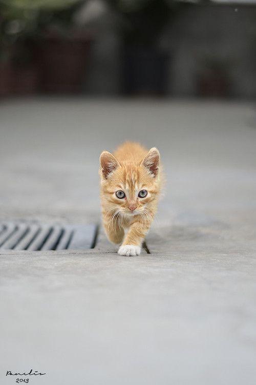 Attenzione.... sono piccolo ♥