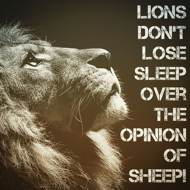 A Lion Doesn T Concern Himself With The Opinions Of A Sheep