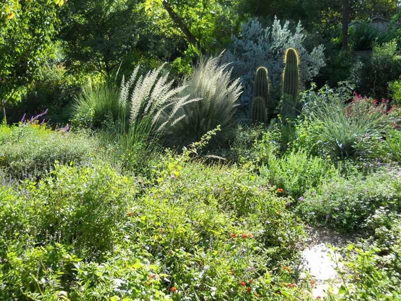 Native Texas Plants For Yards | Native Garden Design Austin Texas Central  Texas Gardener