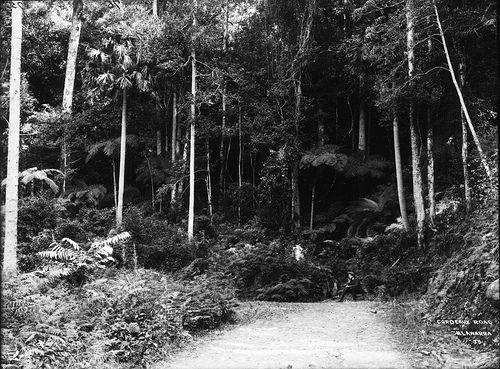 Cordeaux Road, Illawarra by Powerhouse Museum Collection, via Flickr