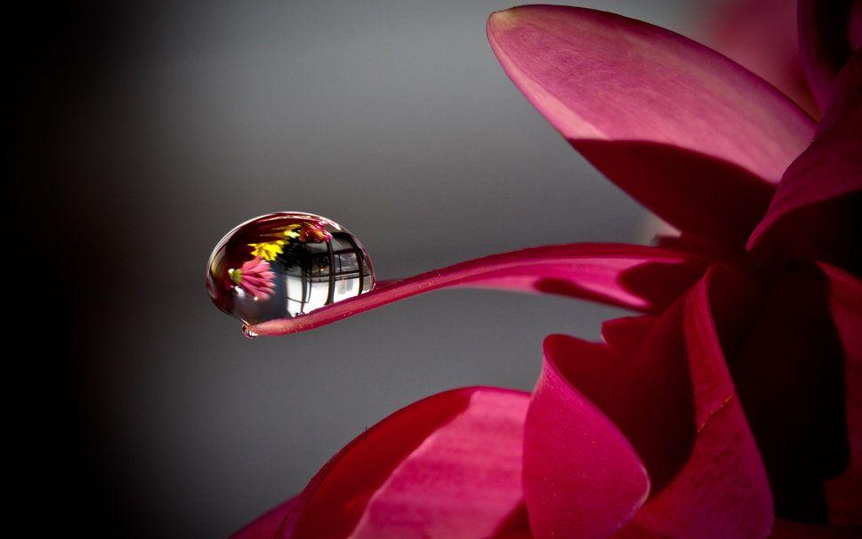Uma Flor Uma Gota De Orvalho Vetor Gotas De Orvalho Gotas De