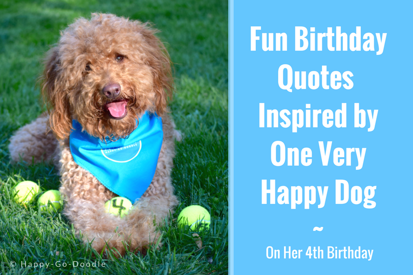 40 Fun Birthday Quotes From A Ridiculously Happy Birthday Dog Dog Birthday Quotes Birthday Quotes Happy Birthday Wishes For A Friend