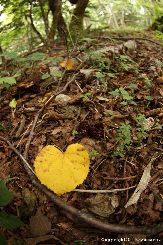 Heart Symbol No1 Follow Your Heart Pinterest