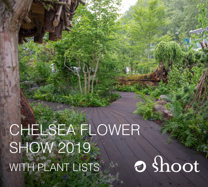RHS Chelsea Flower Show 2019 RHS Chelsea Flower Show 2019 Photos articles and plant lists