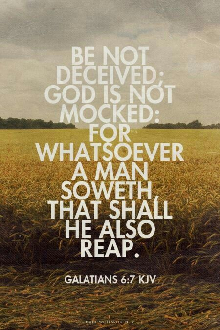 you reap what you sow bible