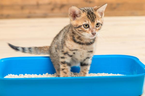 Is Your Cat A Vertical Pee Er The Conscious Cat In 2020 Cat Training Cat Advice Cat Training Tricks