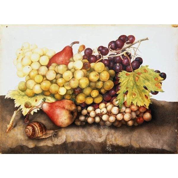 G.Garzoni Still life with grapes. Giovanna Garzoni ❤ liked on ...