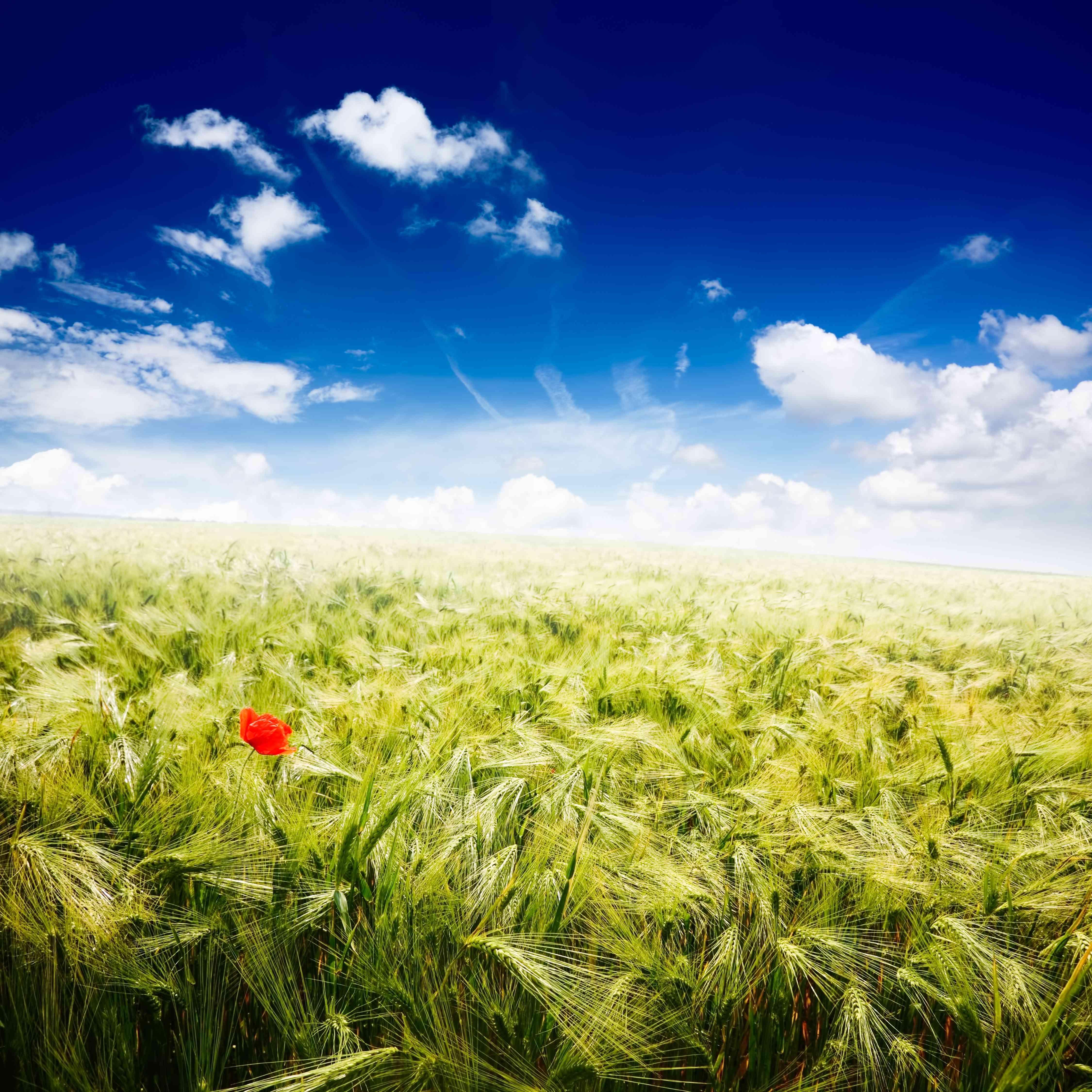 Farmfield Landscape