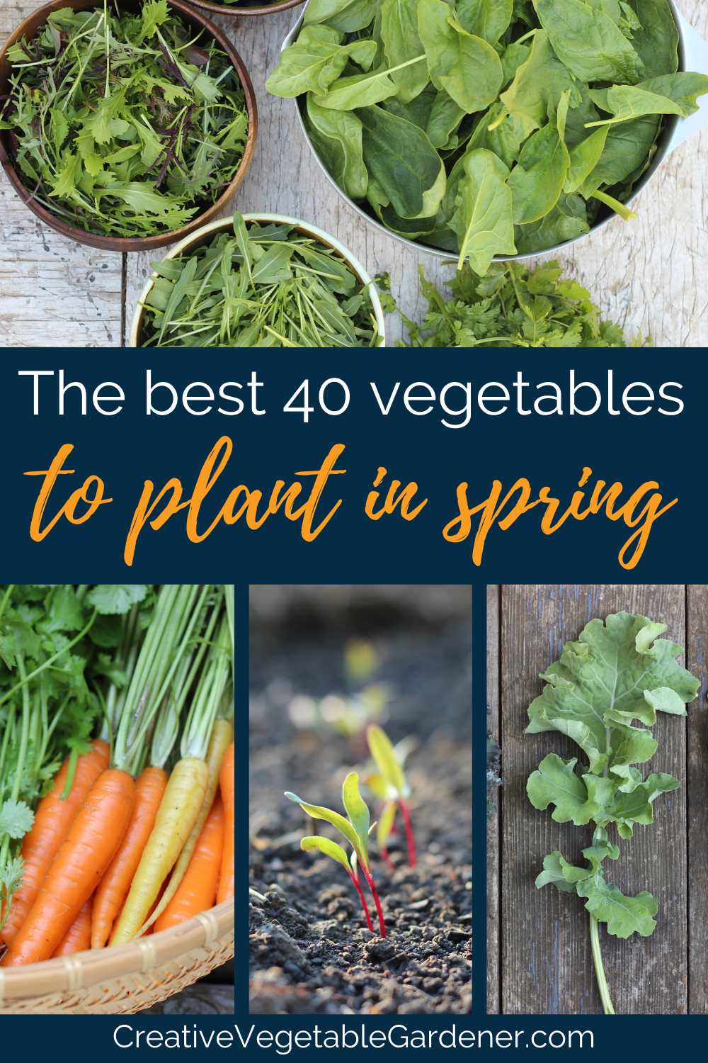 The Ultimate Guide To The Best Vegetables To Plant In Spring Creative Vegetable Gardener In 2021 Vegetable Garden Tips Vegetables Plants