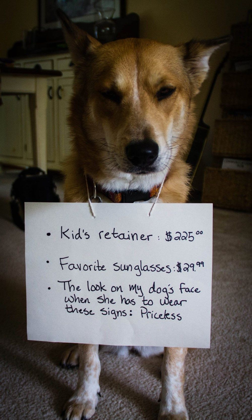 19 Dogs That Have Something To Be Aww Shamed Of Funny Dog Memes