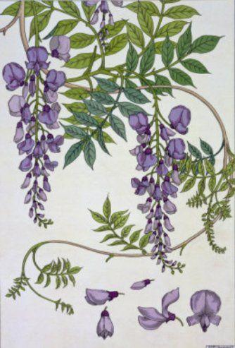 Wisteria La Plante Et Ses Applications Ornementales 1897 By Eugene Grasset Botanical Drawings Flower Painting Botanical Art