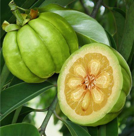 Garcinia Fruit Garcinia Garcinia Cambogia Garcinia Fruit