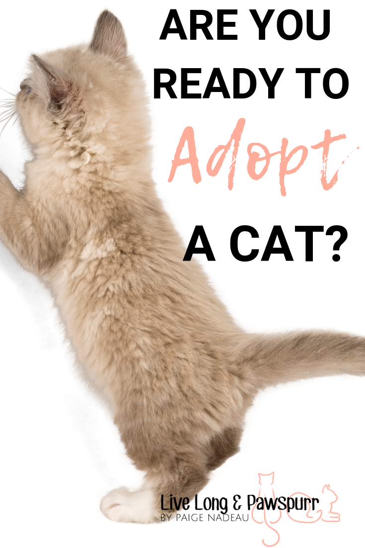 Should I Adopt A Kitten Nine Things To Consider Live Long And Pawspurr Kitten Adoption Cat Adoption Cat Training