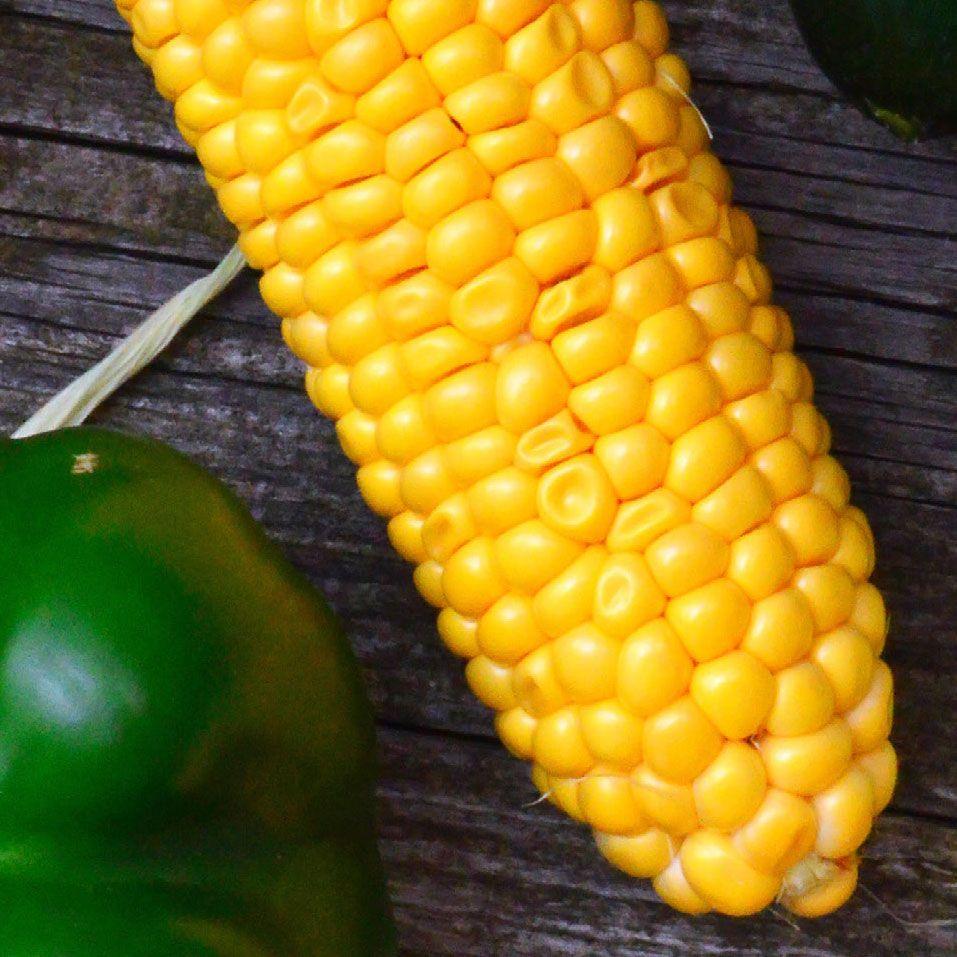 Growing Sweet Corn in a Garden - how to grow corn in ...