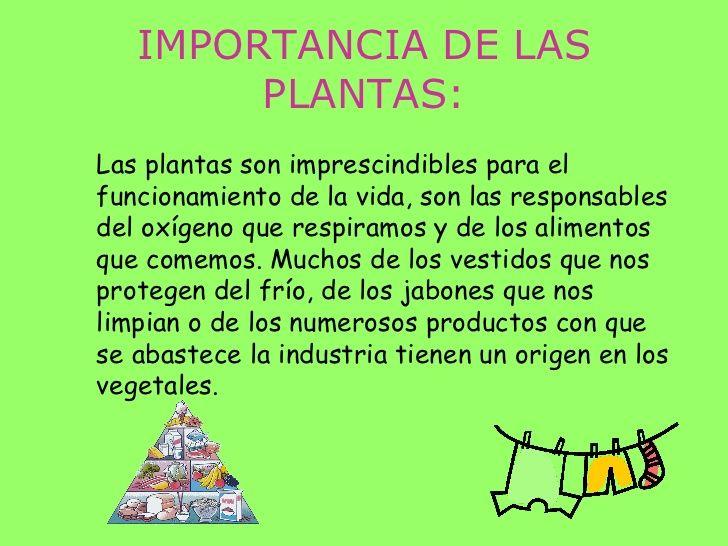 importancia das plantas reino plantas pinterest plantas