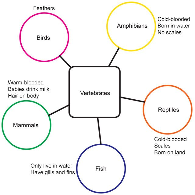 Sample Website Map: Semantic Map, See Description