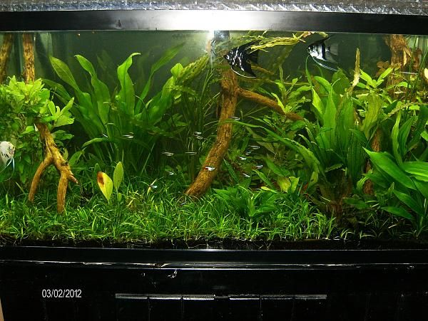 90 gallon jungle tank low light high tech fish aquarium