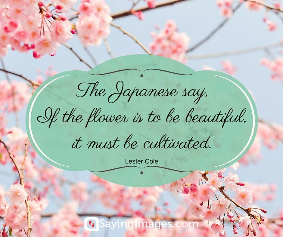 cute quotes for flowers