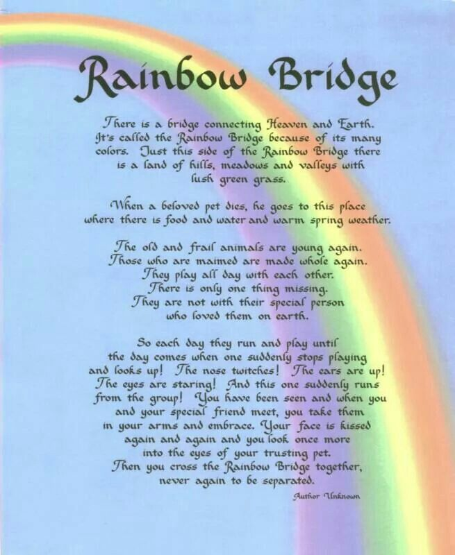 Rainbow Bridge Rainbow Bridge Dog Rainbow Bridge Poem Rainbow