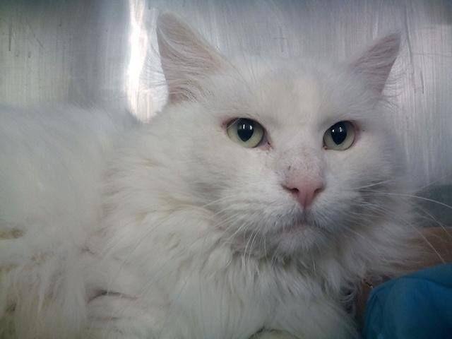 Nik Marley Cat On Cats Cat Adoption Adoption