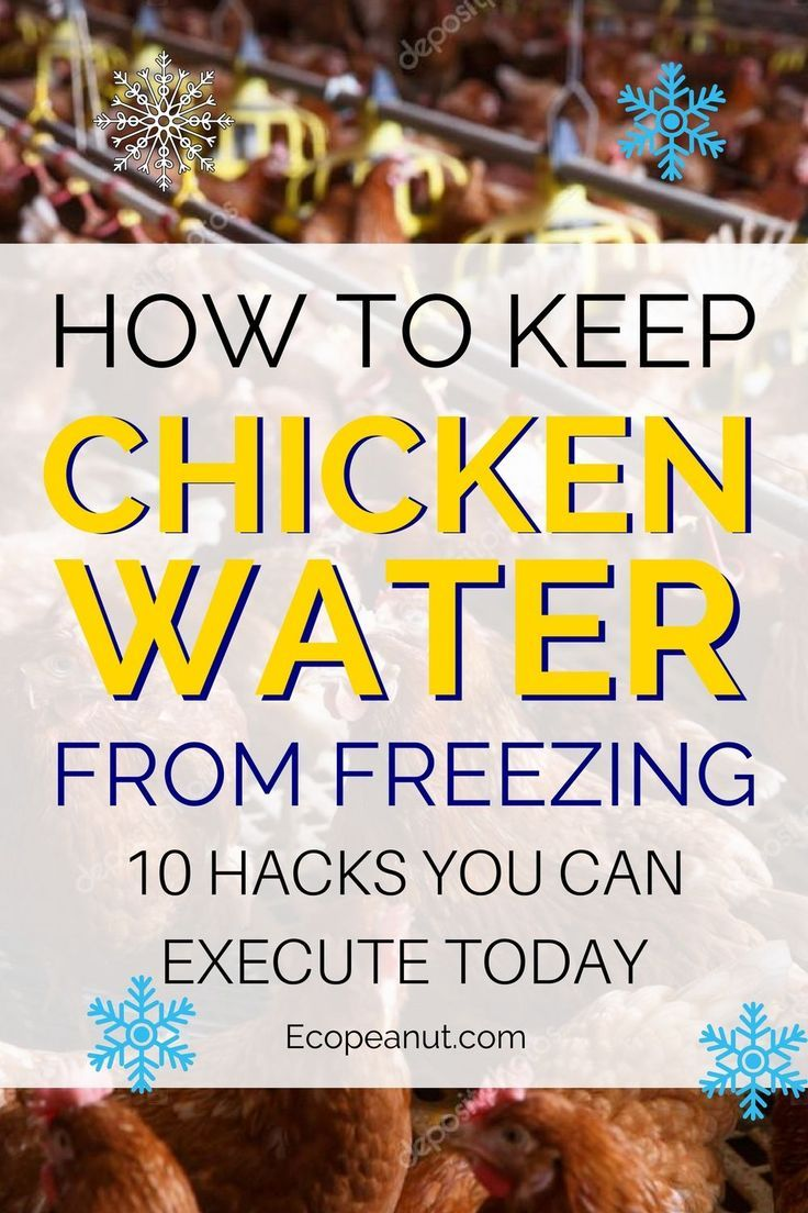 10 Tricks How to Keep Chicken Water From Freezing