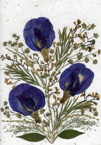 Handgemachte Grußkarte – Urlaub, jede Gelegenheit echte Blume Grußkarte – blau…