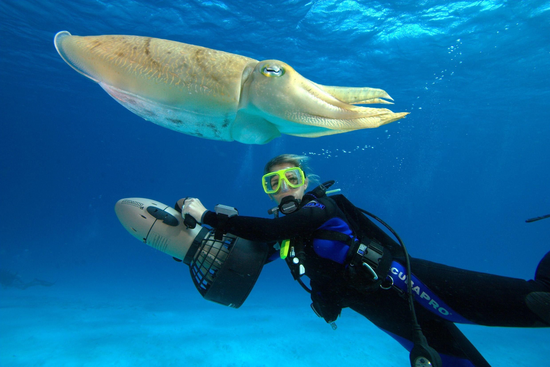Diving world
