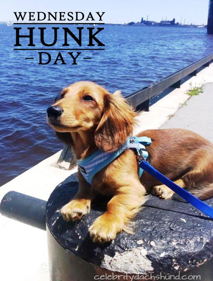 Today S Wednesday Hunk Is Jack Daniels From Hamilton Ontario