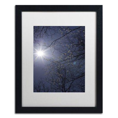Trademark Art 'Springtime Sunshine' by Kurt Shaffer Framed Photographic Print Size: