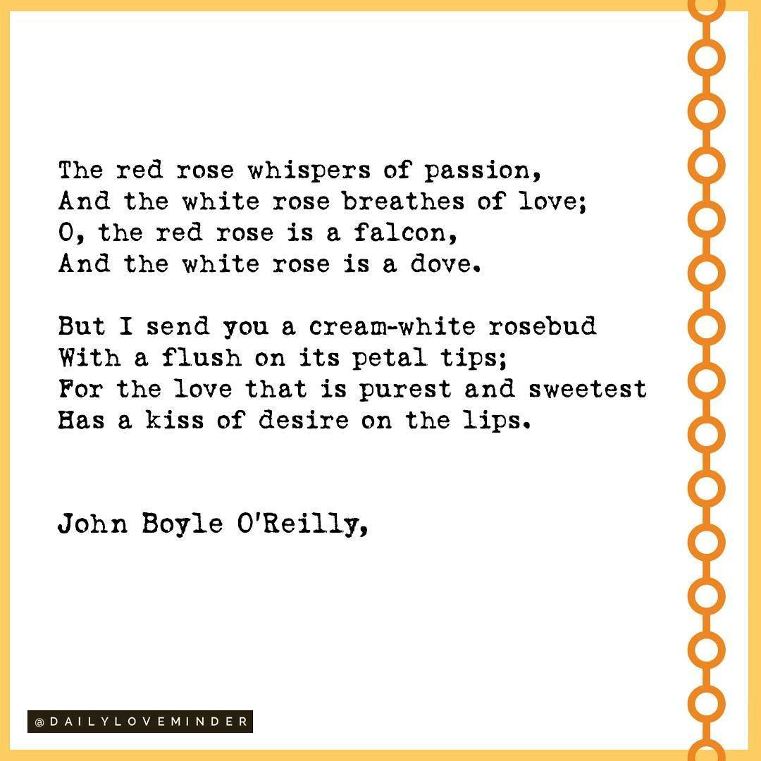 85 Likes 1 Comments Daily Love Minder Dailyloveminder On Instagram The White Rose By John Boyle O Reilly Rose Quotes Rose Poems Love Poems
