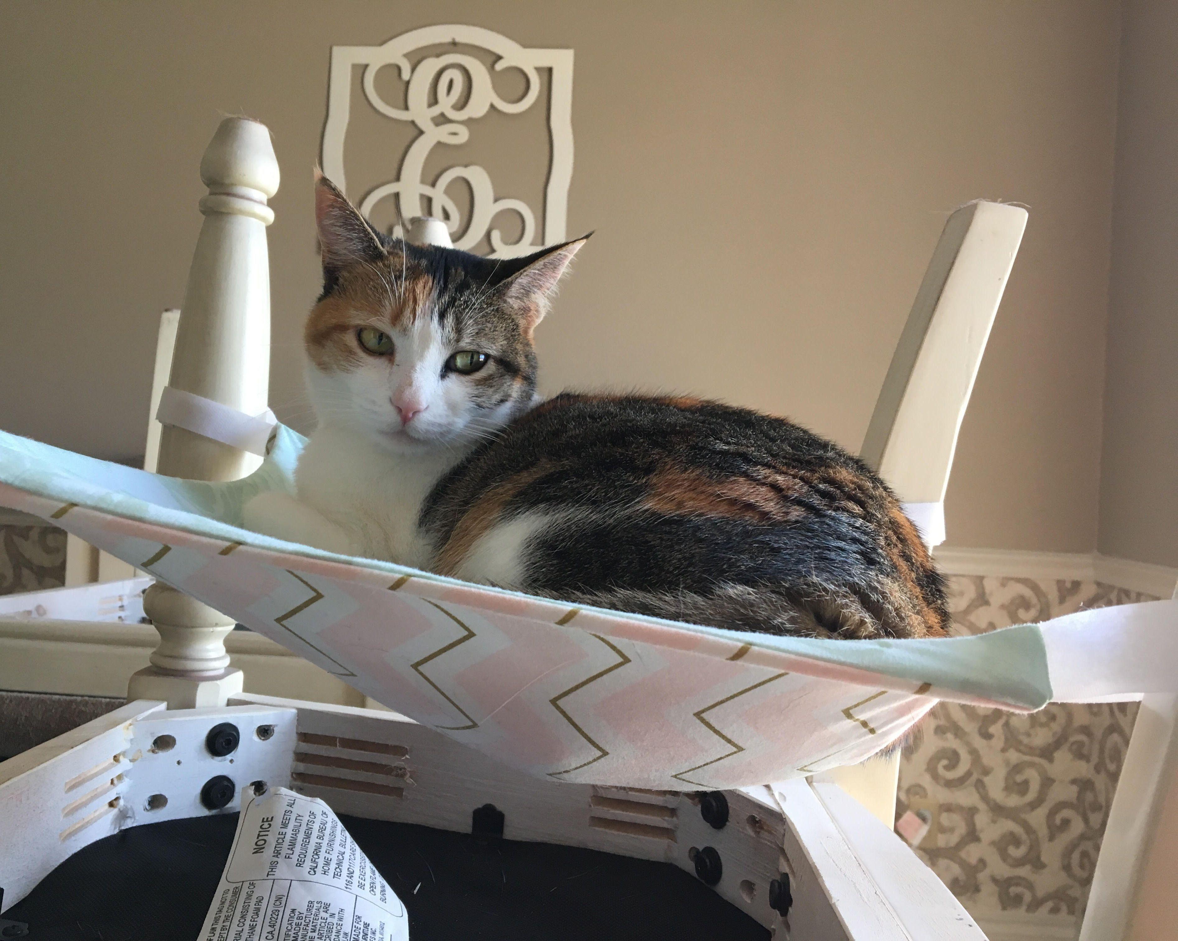 A Hammock In The Sun Cat Bed Cat Hammock Cats