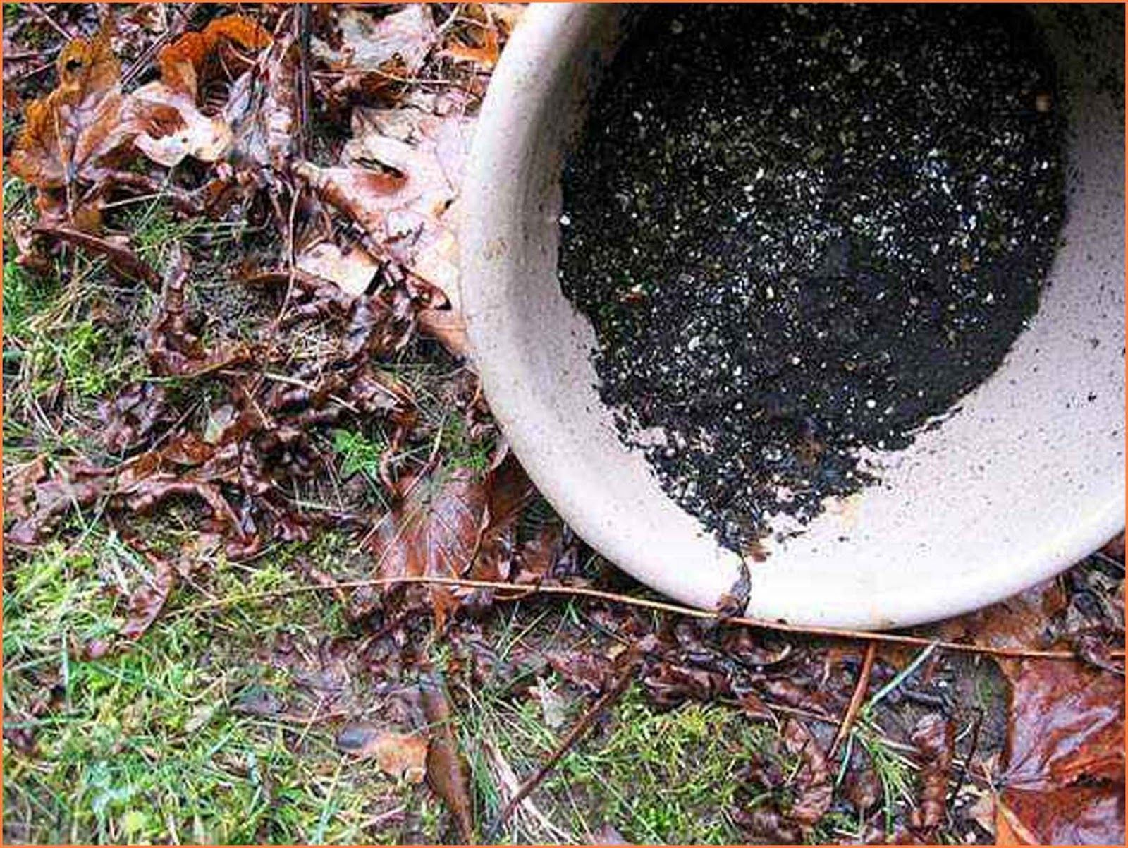 How To Deter Mosquitoes From Your Yard | Lawn, garden ...